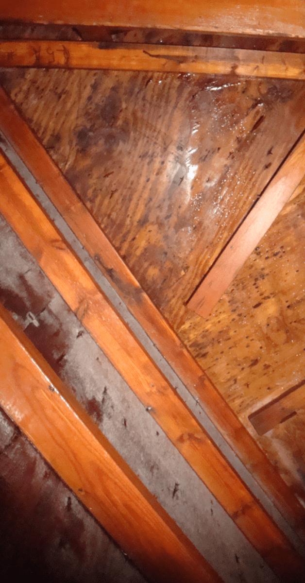 attic moisture image