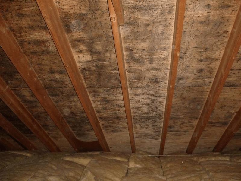 attic mold image