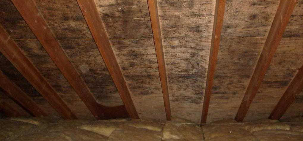 attic mold picture